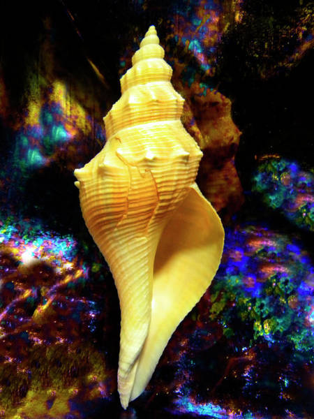Photograph - Seashell by Frank Wilson