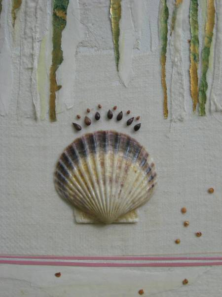 Provincetown Mixed Media - Seashell by Gail Hinchen