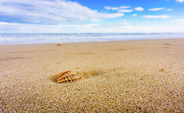 Photograph - Seashell. by Gary Gillette