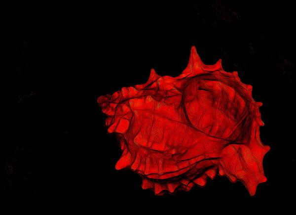 Mixed Media - Seashell Meridian 43 by Lynda Lehmann