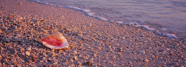 Gulf State Park Photograph - Seashell On The Beach, Lovers Key State by Panoramic Images