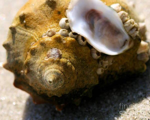 Photograph - Seashells On Seashells by Angela Rath