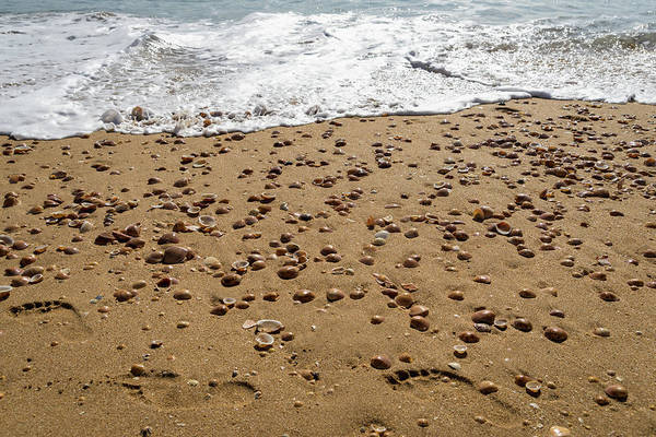 Photograph - Seashells And Footsteps - Lets Go To The Beach by Georgia Mizuleva