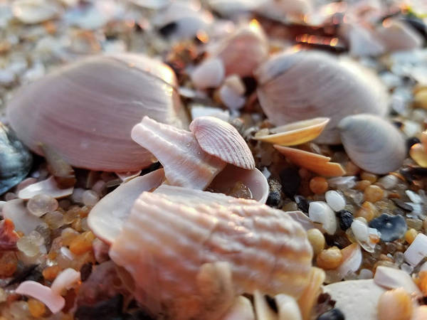 Photograph - Seashells And Pebbles by Robert Banach