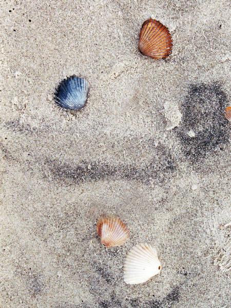 Digital Art - Seashells By The Seashore  by Barry Jones