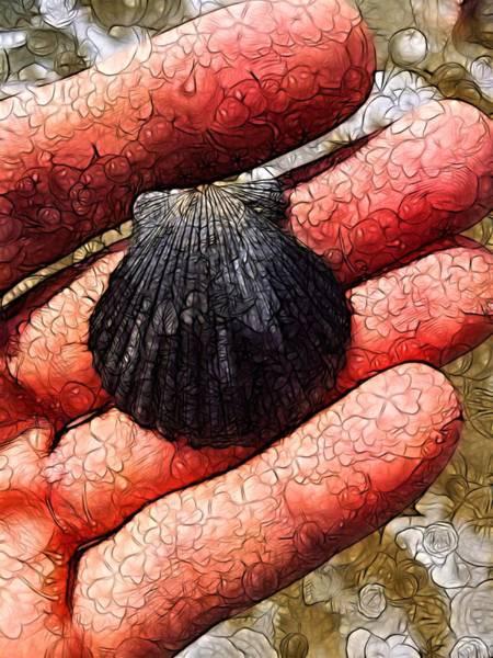 Nature Digital Art - Seashells By The Seashore by Nick Heap