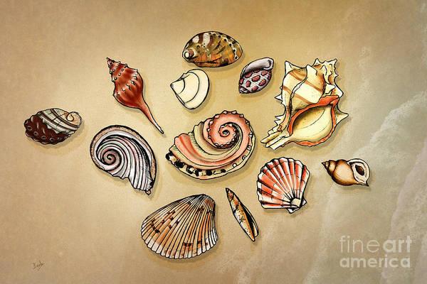 Wall Art - Digital Art - Seashells Collection by Peter Awax