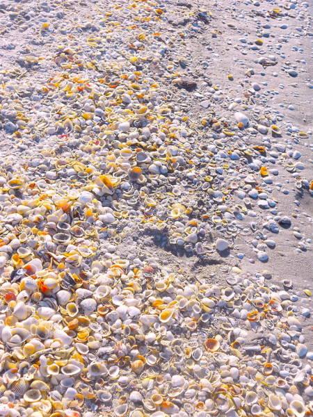 Photograph - Seashells In Sanibel Island, Florida by Monique Wegmueller