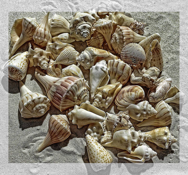 Seashells On The Beach Art Print
