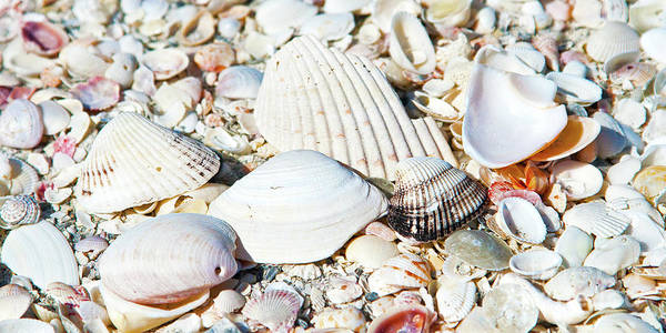 Wall Art - Photograph - Seashells On The Beach On Vacation by ELITE IMAGE photography By Chad McDermott