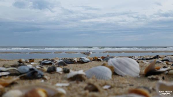 Photograph - Seashells Seagull Seashore by Robert Banach