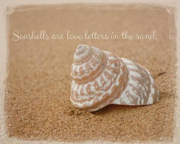 Photograph - Seashells by Teresa Wilson
