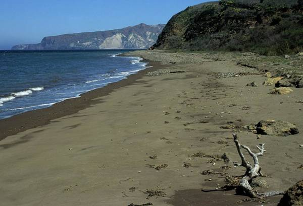 Photograph - Seashore And Driftwood by Don Kreuter