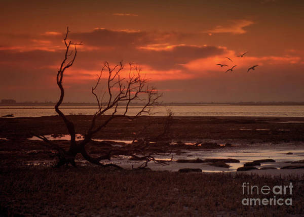 Seashore At Dawn Art Print