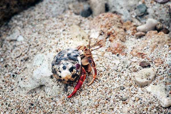 Photograph - Seaside Condo 2 by Jill Love
