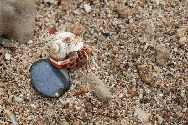 Photograph - Seaside Condo 1 by Jill Love