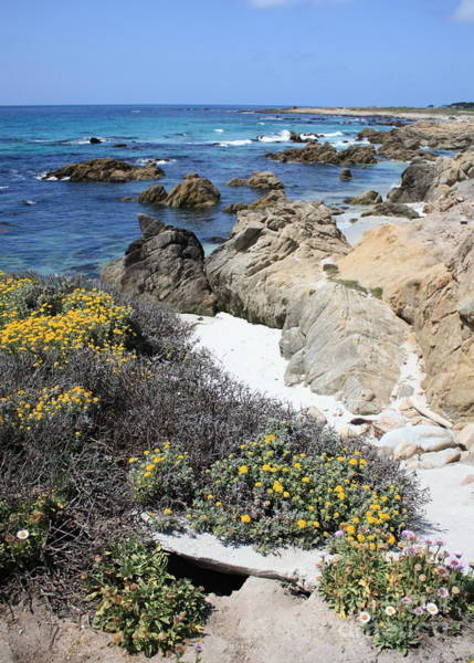 Photograph - Seaside Flowers And Rocky Shore by Carol Groenen