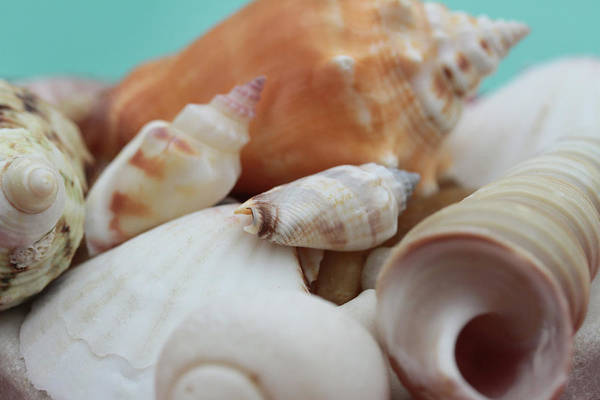 Seaside Seashells Art Print