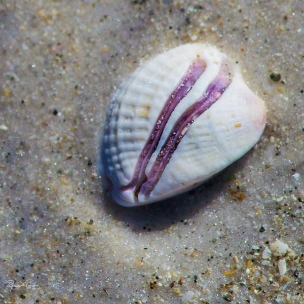 Photograph - Seaside Treasure 4 by Susan Molnar