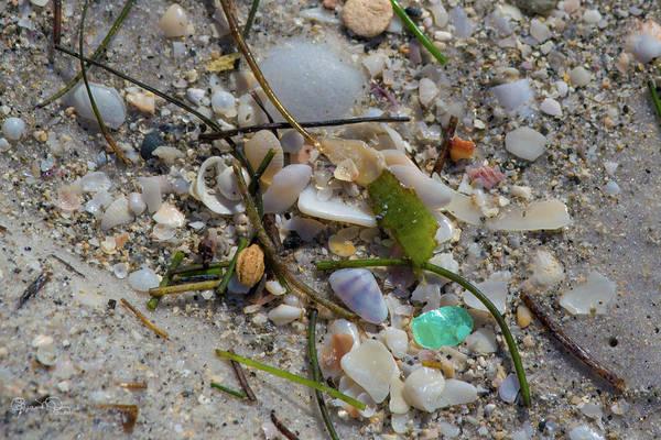 Photograph - Seaside Treasures 1 by Susan Molnar