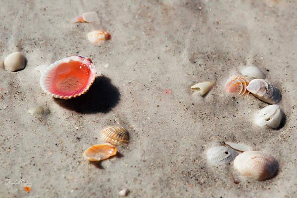 Photograph - Seaside Treasusres 5 by Susan Molnar