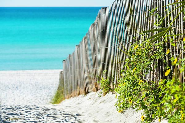 Photograph - Seaside Wildflower Sand Fence by Kurt Lischka