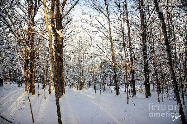 Photograph - Seasons Change by Alana Ranney