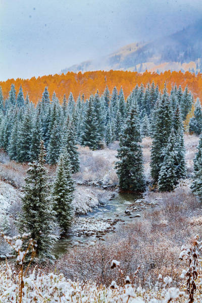 Photograph - Seasons Clash by Teri Virbickis