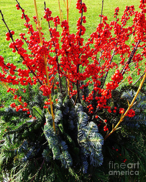 Photograph - Seasons Greetings by Xueling Zou