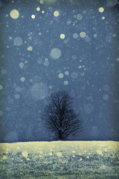 Photograph - Seasons - Winter by Phyllis Meinke