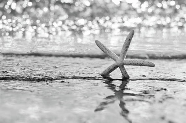 Uplift Photograph - Seastar Seafoam by Laura Fasulo