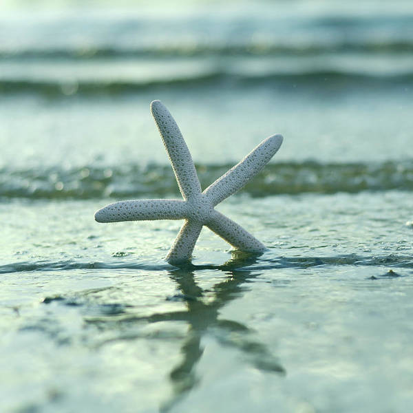 Wall Art - Photograph - Summer Seastar Square by Laura Fasulo