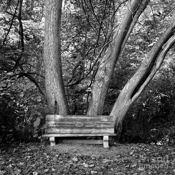 Photograph - Seat For Three by Patrick M Lynch