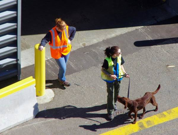 Photograph - Seattle Dock Dog Workers 1 by Phyllis Spoor