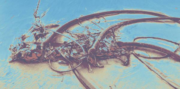 Photograph - Seaweed #2 by Anne Westlund