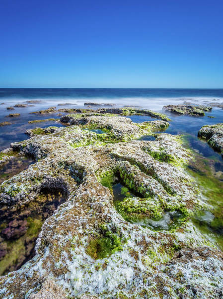 Photograph - Seaweed And Salt. by Gary Gillette