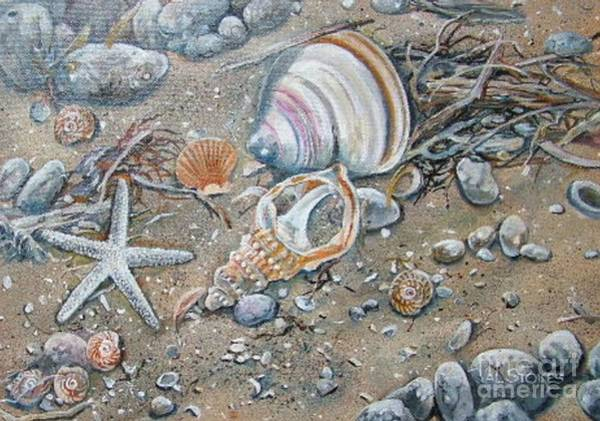 Painting - Seaweed And Shells by Val Stokes