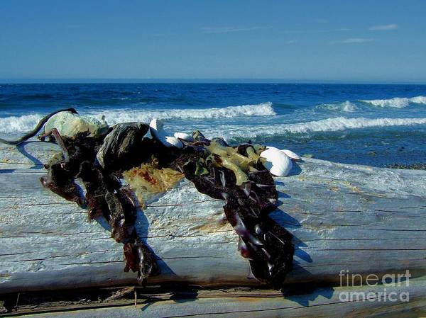 Photograph - Seaweed Driftwood Shells And The Sea by Delores Malcomson