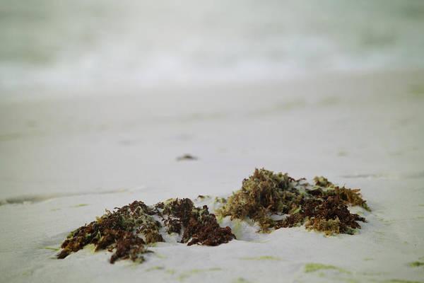 Wall Art - Photograph - Seaweed by Toni Hopper