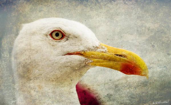 Galicia Photograph - Sebastian The Seagull by Weston Westmoreland