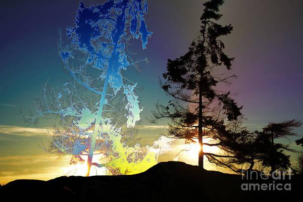 Wall Art - Photograph - Sechelt Tree 2 by Elaine Hunter