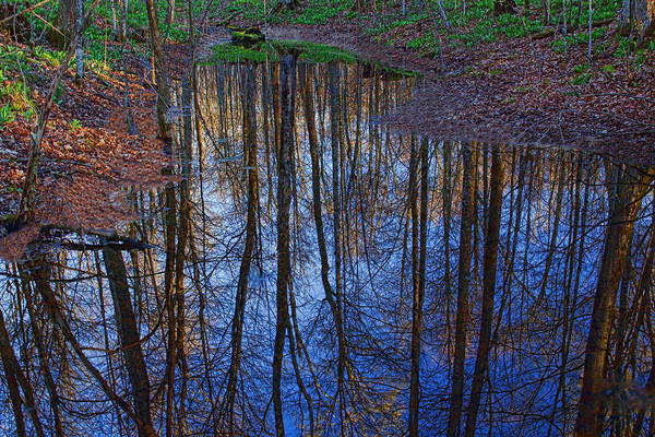 Photograph - Secluded Pond Reflection by Dale Kauzlaric