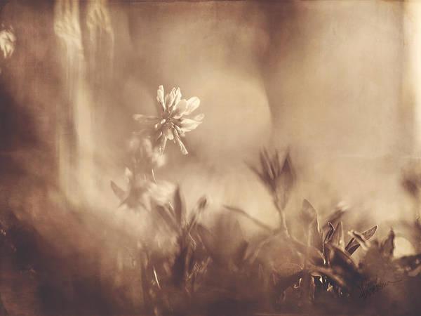 Photograph - Secret Admirer by Kharisma Sommers