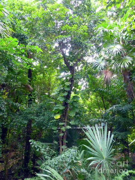 Photograph - Secret Bridge In The Tropical Garden by Francesca Mackenney