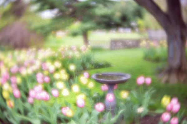 Photograph - Secret Garden 2 by Brian Hale