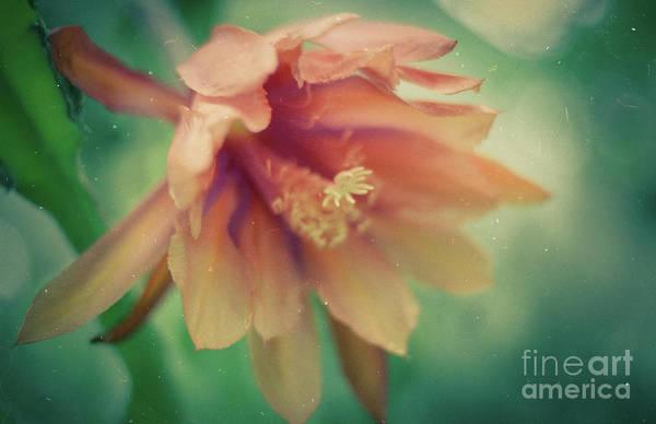 Photograph - Secret Garden by Ana V Ramirez