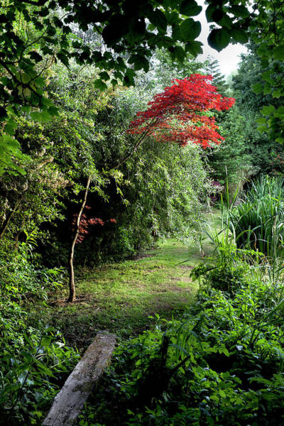 Moberly Photograph - Secret Garden by Guy Moberly