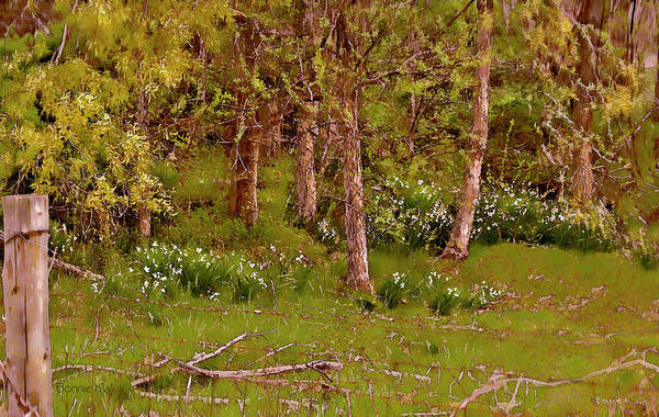 Digital Art - Secret Garden In The Woods by Bonnie Willis
