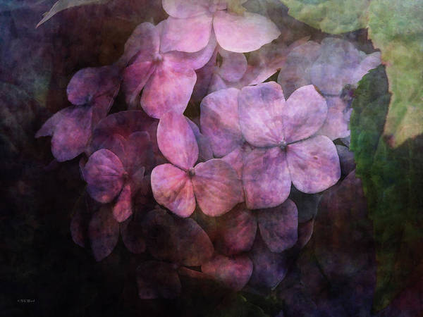 Secret Hydrangea 1538 Idp_2 Art Print
