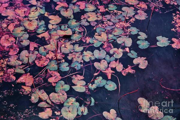 Pink Lily Photograph - Secret Pond by Priska Wettstein